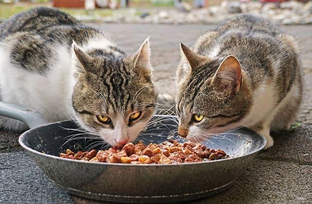 Alimentos-Proibidos-Gatos-Perros