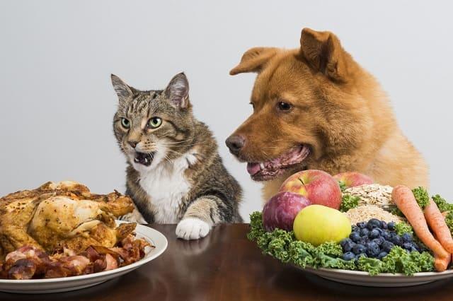 Alimentos-Proibidos-Mascotas