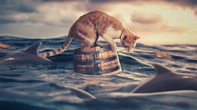 Gatos miedo al agua