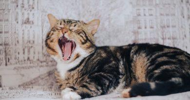 Por que me muerde mi gato