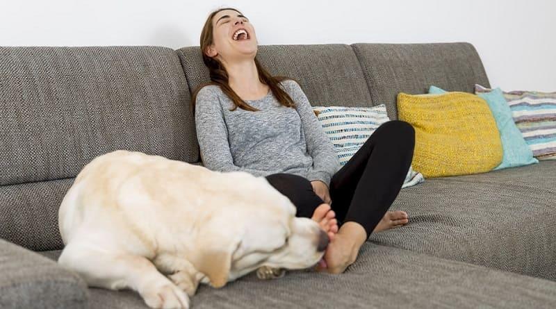 Por que mi perro me lame los pies