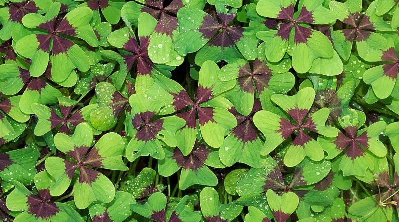 Día de la suerte y numerología: definiciones y cálculo